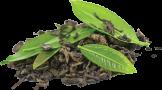 Sencha Green Tea 0